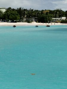 Barbados - Sea Turtles w/ Shoreline in sight