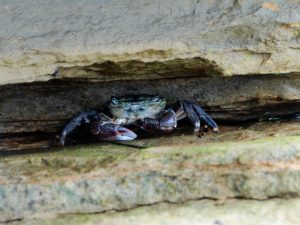 San Deigo - Crab at Cabrillio National Monument